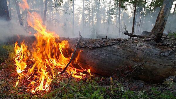 Šumski požar u Rusiji - Sputnik Srbija