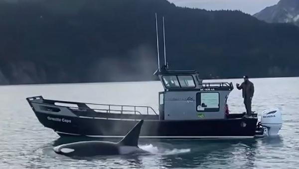 Видра и кит убица: Ко је победио - Sputnik Србија