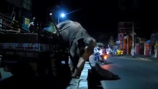 Слон скаче из камиона. - Sputnik Србија