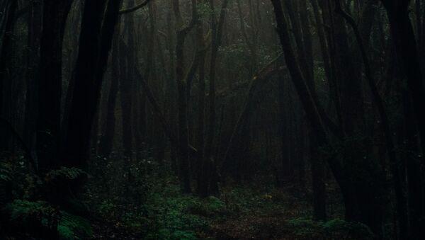 Мрачна шума - Sputnik Србија