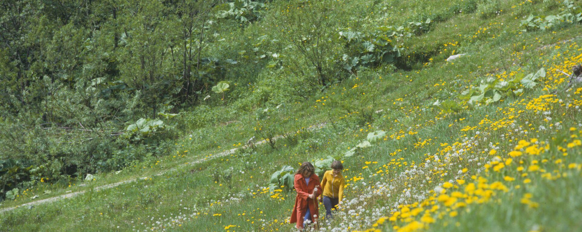 Priroda na Sahalinu - Sputnik Srbija, 1920, 29.08.2021