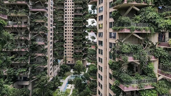 Soliteri zarasli u biljke u kineskom gradu Čengdu - Sputnik Srbija