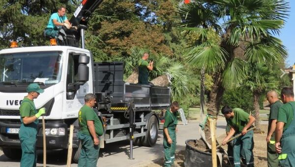 Ispred paviljona je zasađeno šest stabala visokog kvaliteta, uvezenih iz Španije - Sputnik Srbija