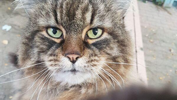 Мачка - Sputnik Србија