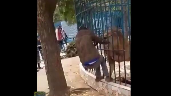 Incident u ZOO vrtu - Sputnik Srbija