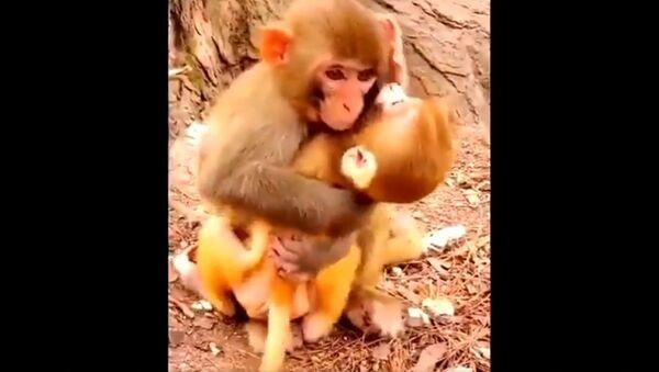 Majmunica grli bebu - Sputnik Srbija