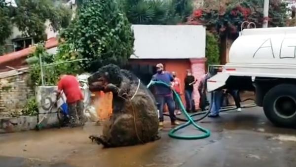 Џиновски пацов из канализације - Sputnik Србија