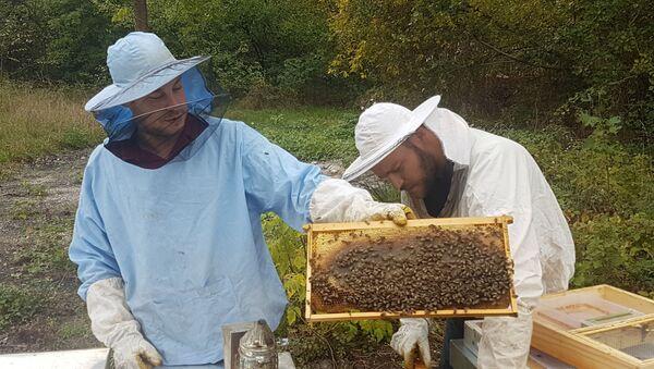 Дарио Мардешић са пчелама - Sputnik Србија
