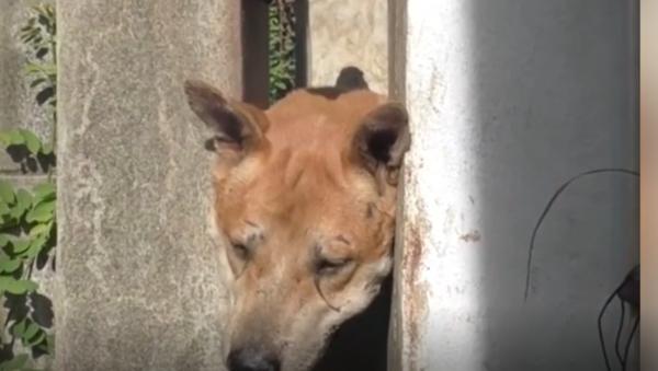 Заробљен пас - Sputnik Србија