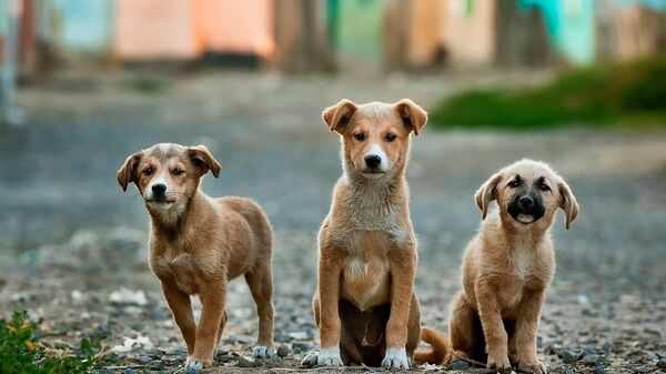 Улични пси - Sputnik Србија
