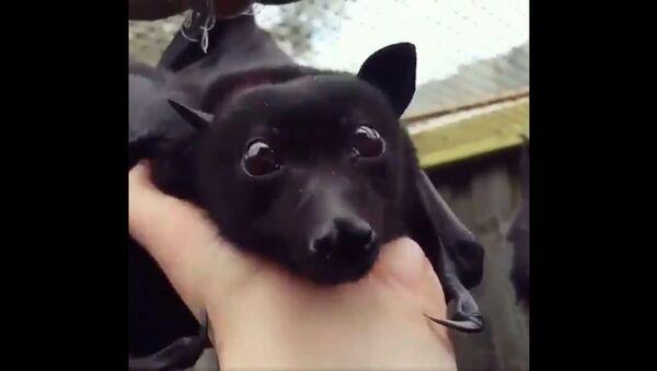 Слепи миш - Sputnik Србија