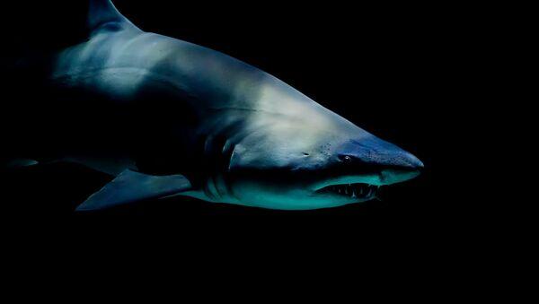 Ајкула под морем - Sputnik Србија