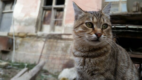Mačka - Sputnik Srbija