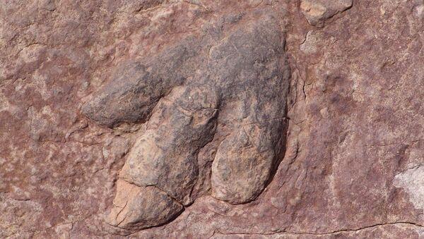 Otisak stopala dinosaurusa - Sputnik Srbija