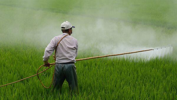 Рад на пољу пшенице - Sputnik Србија