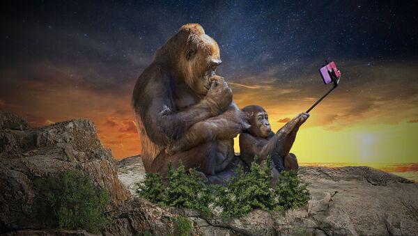 Majmuni drže mobilni telefon - Sputnik Srbija