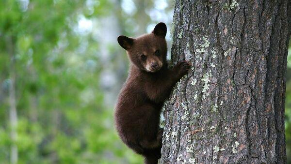 Mladunče medveda - Sputnik Srbija