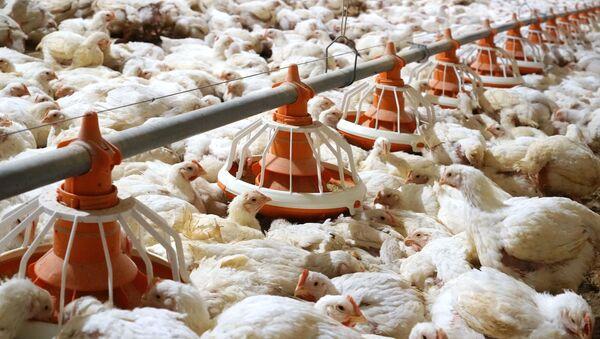 На југу Русије седморо заражено новим типом птичјег грипа, први случај у свету - Sputnik Србија