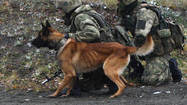 Војни пас - Sputnik Србија