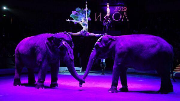 Predstava slonova u cirkusu - Sputnik Srbija