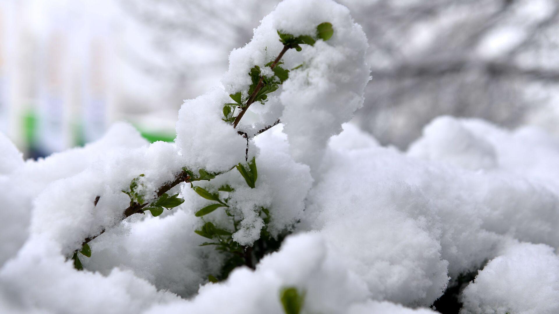 Sneg koji je sinoć počeo da pada širom Srbije osvanuo je danas negde samo na krovovima, drveću i travnjacima, a negde se zabelelo kao usred januara. - Sputnik Srbija, 1920, 29.08.2021