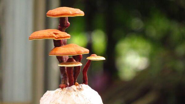 Печурке - Sputnik Србија