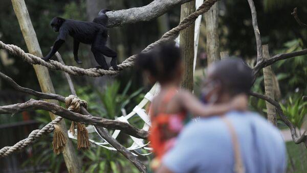 Zoološki vrt u Rio de Žaneiru - Sputnik Srbija