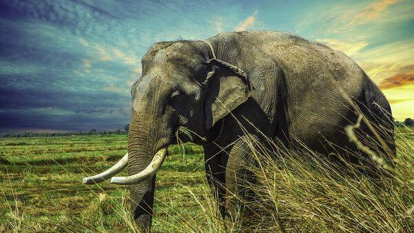 Slon - Sputnik Srbija