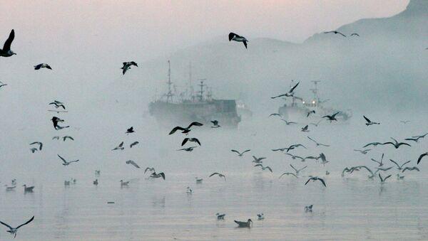 Ribarski brodovi kod obale ostrva Šikotan u Sahalinskoj oblasti - Sputnik Srbija