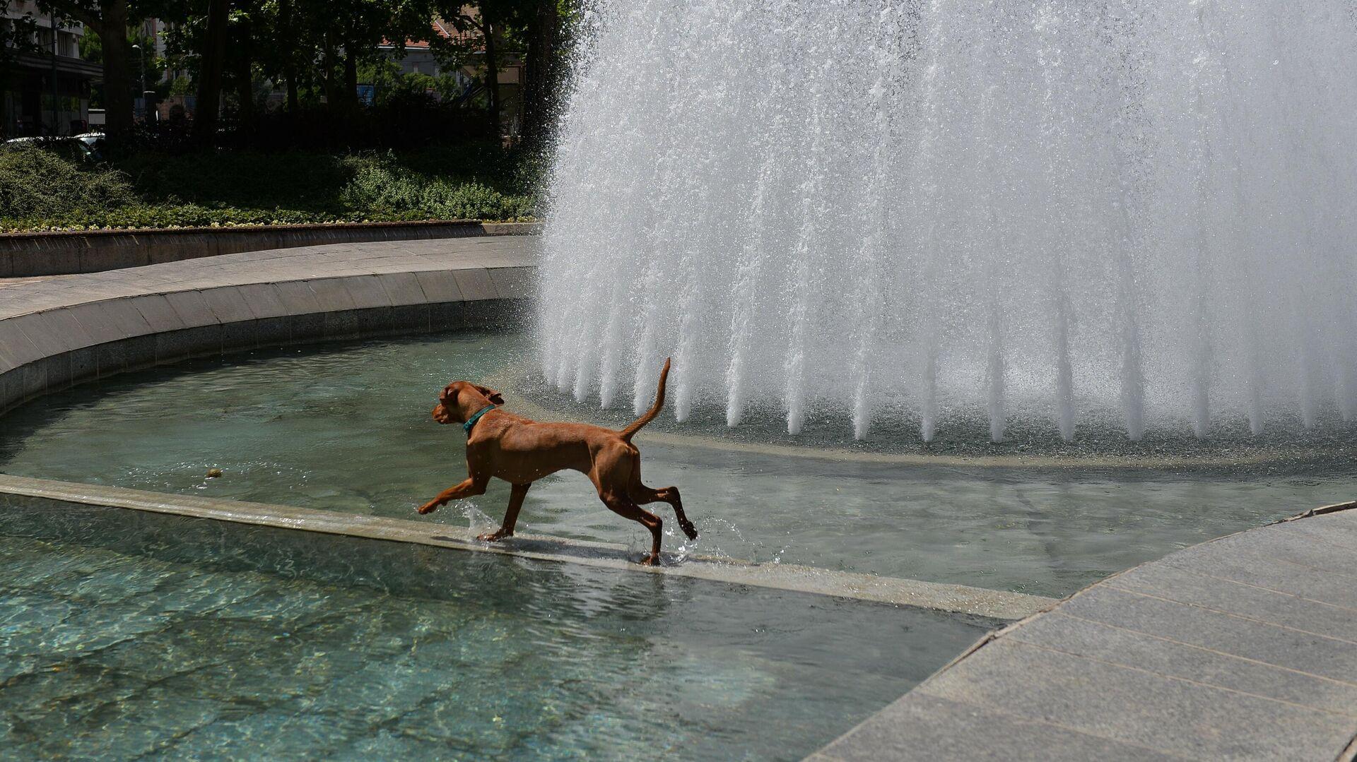 Pas se kupa u fontani - Sputnik Srbija, 1920, 04.08.2021