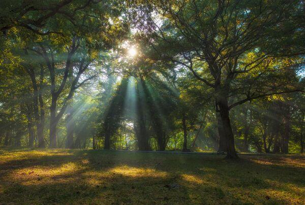 """Аутор – Александар Аседач""""Било је дивно јутро у Бети. Сунце се пробијало кроз грање, а лака измаглица пратила је сваки зрак"""", прича он.Бета је сеоце у Краснодарском крају, регион Геленџика. - Sputnik Србија"""