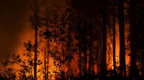 Šumski požari  - Sputnik Srbija