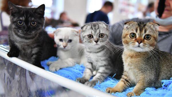 Mačići na izložbi Košariki šou u Moskvi - Sputnik Srbija