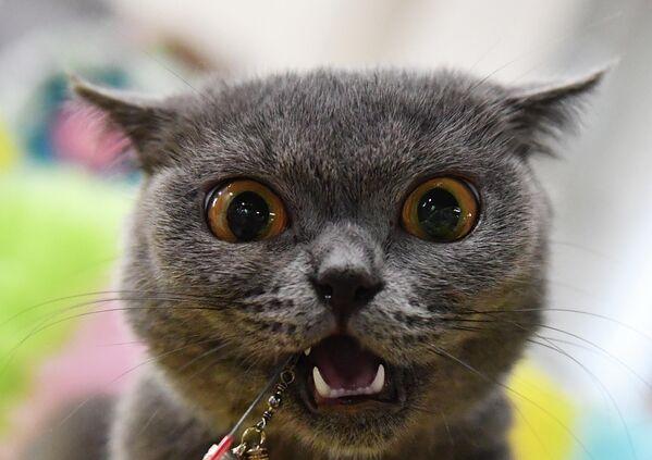 Mačka na izložbi Košariki šou u Moskvi - Sputnik Srbija