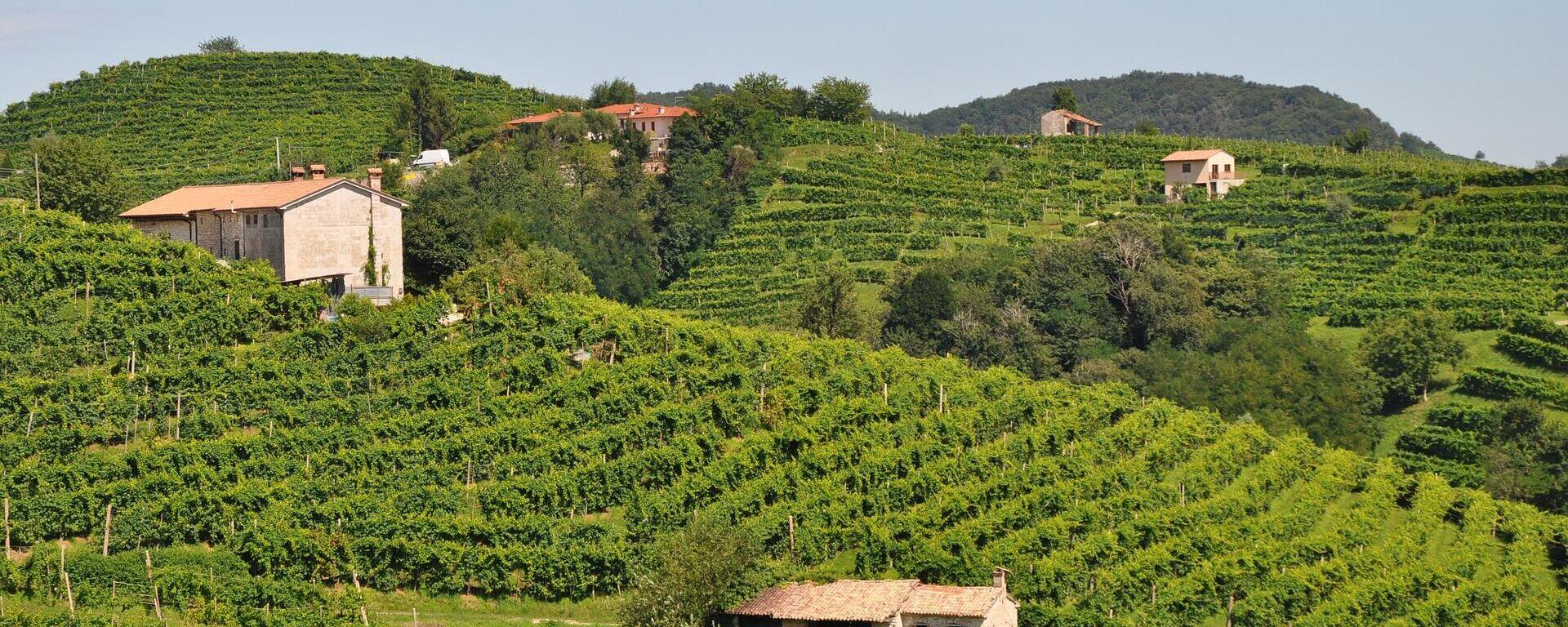 Виноград у северној Италији у ком се производи традиционално вино просеко - Sputnik Србија, 1920, 15.09.2021