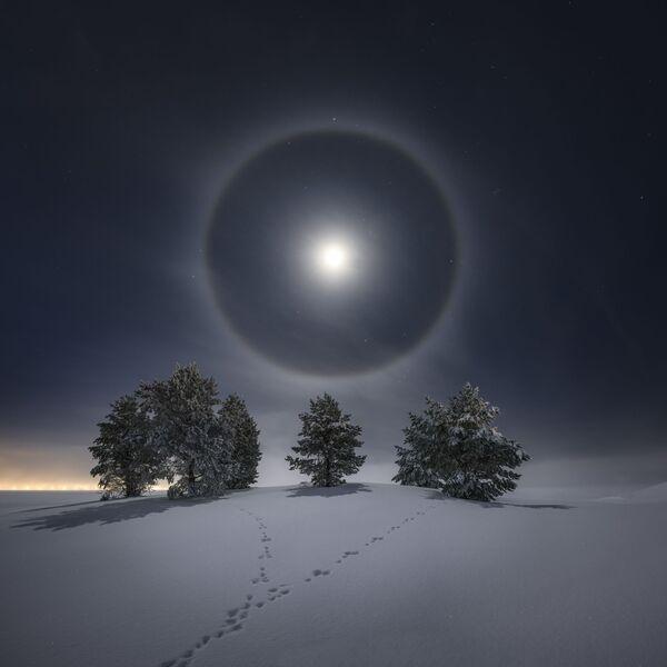 Ово је светли лунарни ореол. Када је фотограф направио ову фотографију било је минус 16 степени Целзијуса и ваздух је био испуњен малим кристалима леда који су омогућили овај ореол.Овако правилан ореол чешће се види око Сунца. Месечина мора бити прилично јака да би ореол био видљив, па је чешћа у данима пуног месеца.Те ноћи је Месец био 90% осветљен, тако да је био скоро пун. Са леве стране можете видети градска светла Остерсунда у Шведској. У доњем десном углу у ореолу можете видети како прелази сазвежђе Орион. У првом плану налазе се трагови зеца који је одскакутао до дрвећа.Остерсунд, Шведска, 25. јануара 2021. - Sputnik Србија