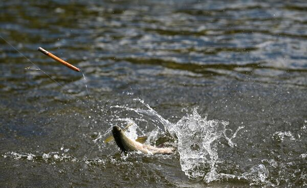 Сибирске реке су богате рибом - Sputnik Србија