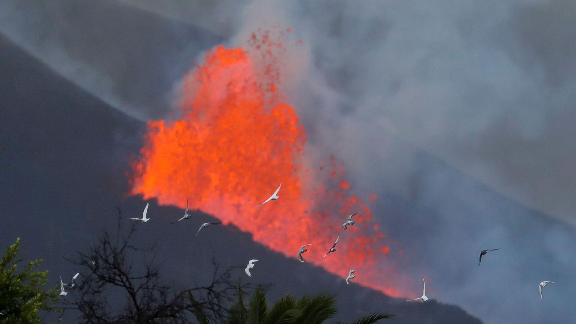 Голуби на фоне лавы после извержения вулкана на канарском острове Ла-Пальма  - Sputnik Србија, 1920, 05.10.2021