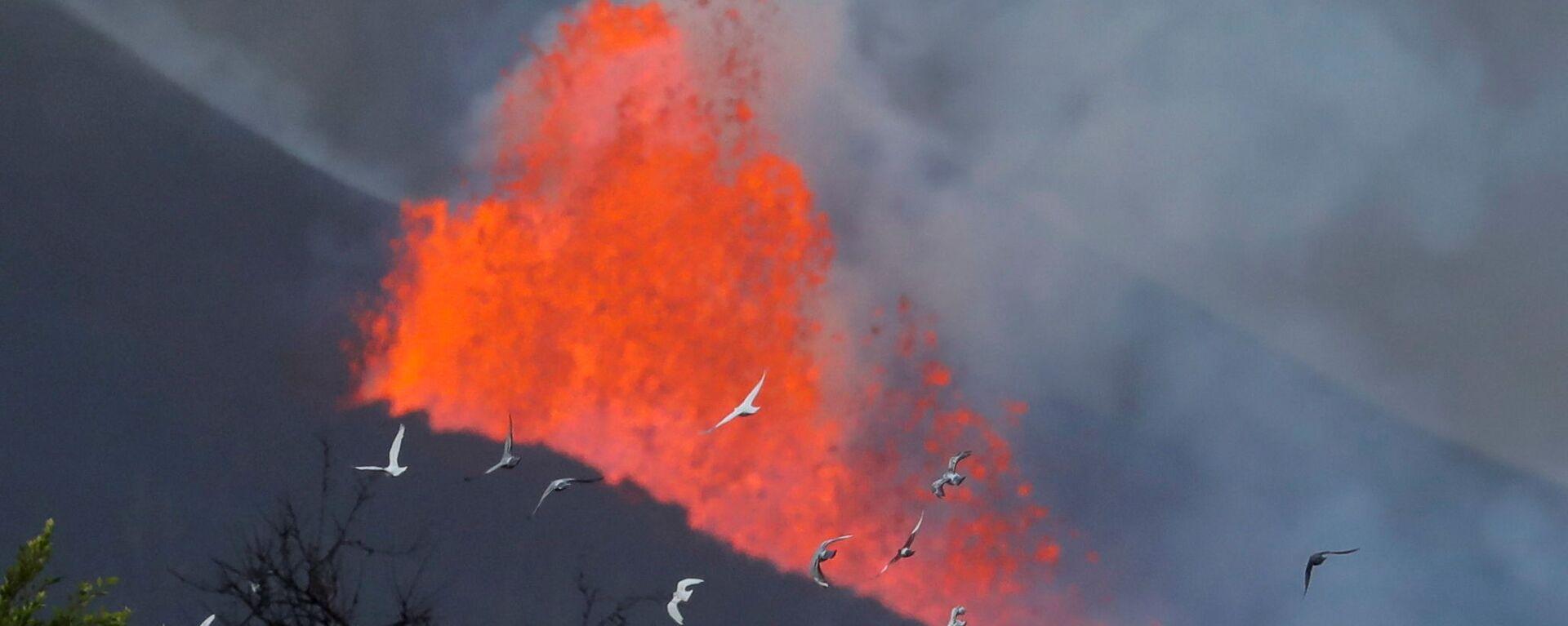 Golubi na fone lavы posle izverženiя vulkana na kanarskom ostrove La-Palьma  - Sputnik Srbija, 1920, 05.10.2021