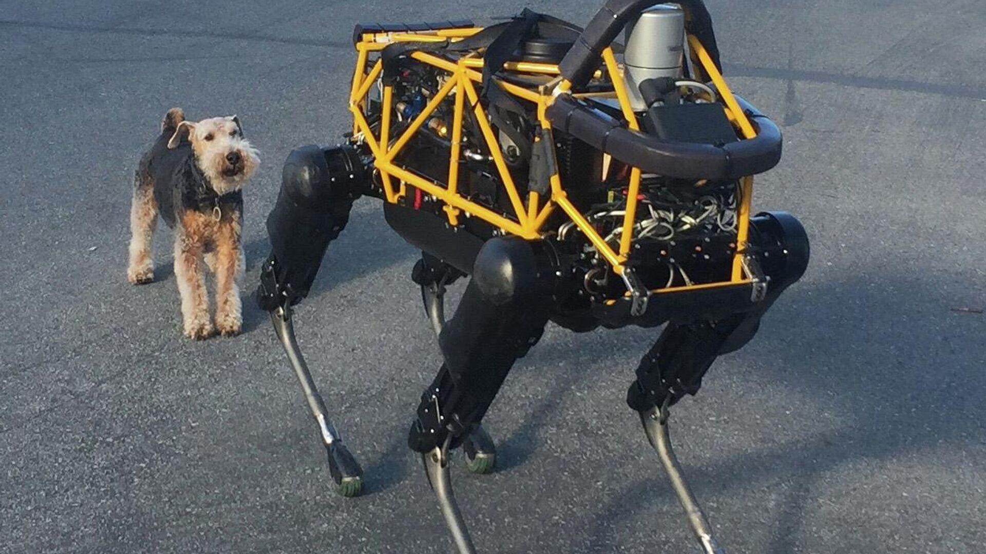 Пас робот - Sputnik Србија, 1920, 14.10.2021