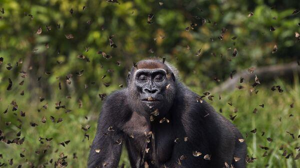 Snimok Malui britanskogo fotografa Anup Shah, pobedivšiй v konkurse The Nature Conservancy 2021  - Sputnik Srbija