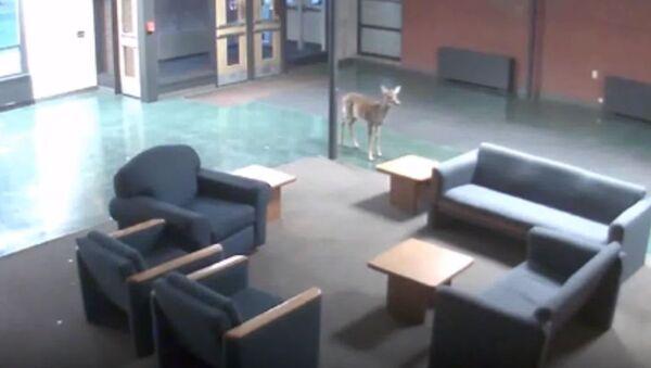 Bambi na uglancanom podu - Sputnik Srbija