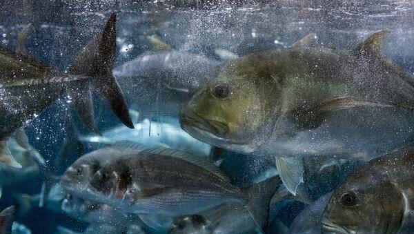Океанариум и подводни зооврт у Дубаију - Sputnik Србија