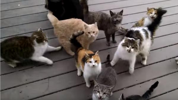 Хор гладних мачака - Sputnik Србија