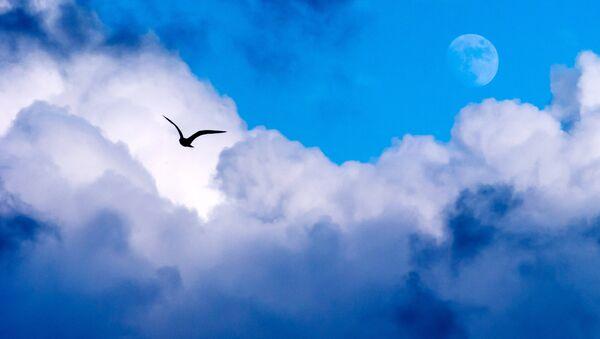 Птица на небу у Севастопољу - Sputnik Србија