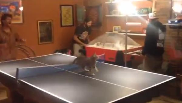 Kitten just can't stay away from ping pong showdown - Sputnik Srbija