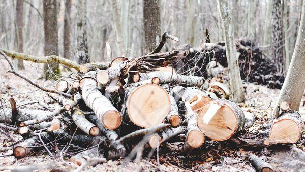 Посечено дрвеће - Sputnik Србија