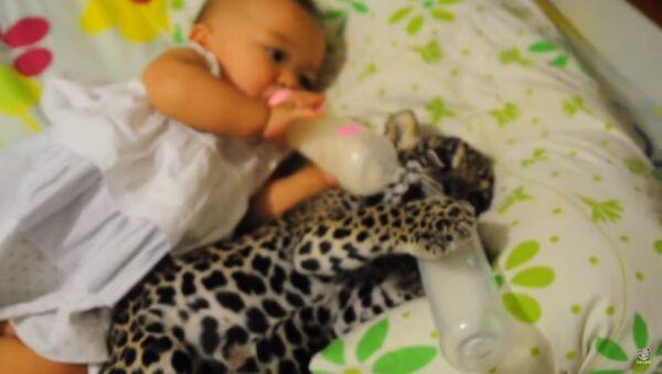 Beba i jaguar zajedno piju mleko - Sputnik Srbija
