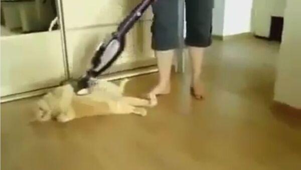 Мачка и усисвач - Sputnik Србија