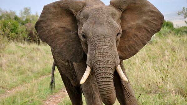 Фигурицу слона треба држати поред узглавља... - Sputnik Србија